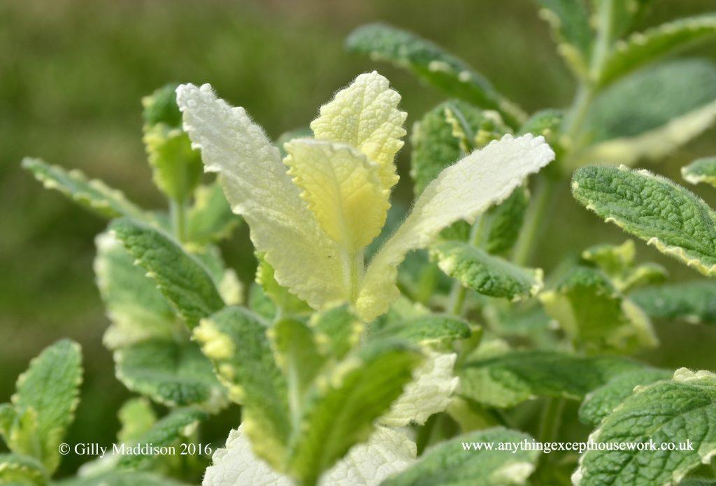 wedding herbs
